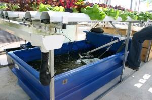 aquaponics-2552598398_02192ce095