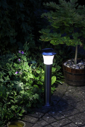 Solar Lights for Gardens